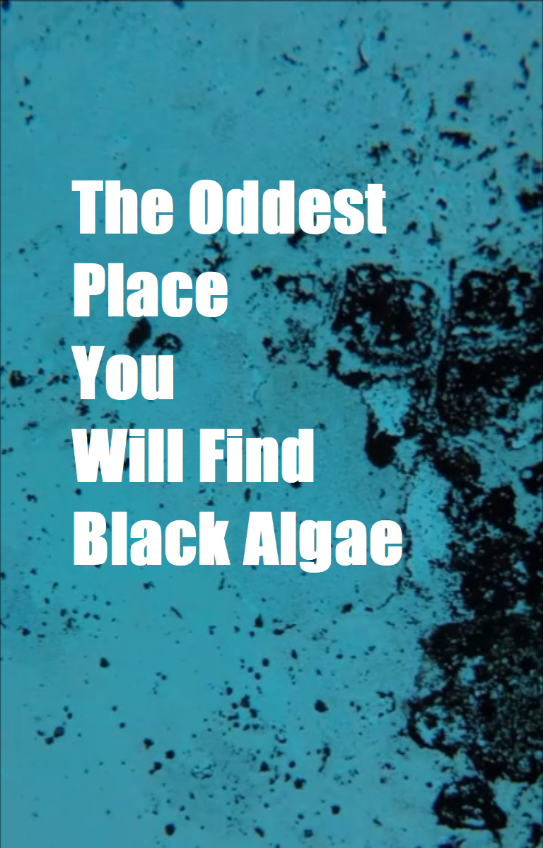 How to Get Rid of Black Algae