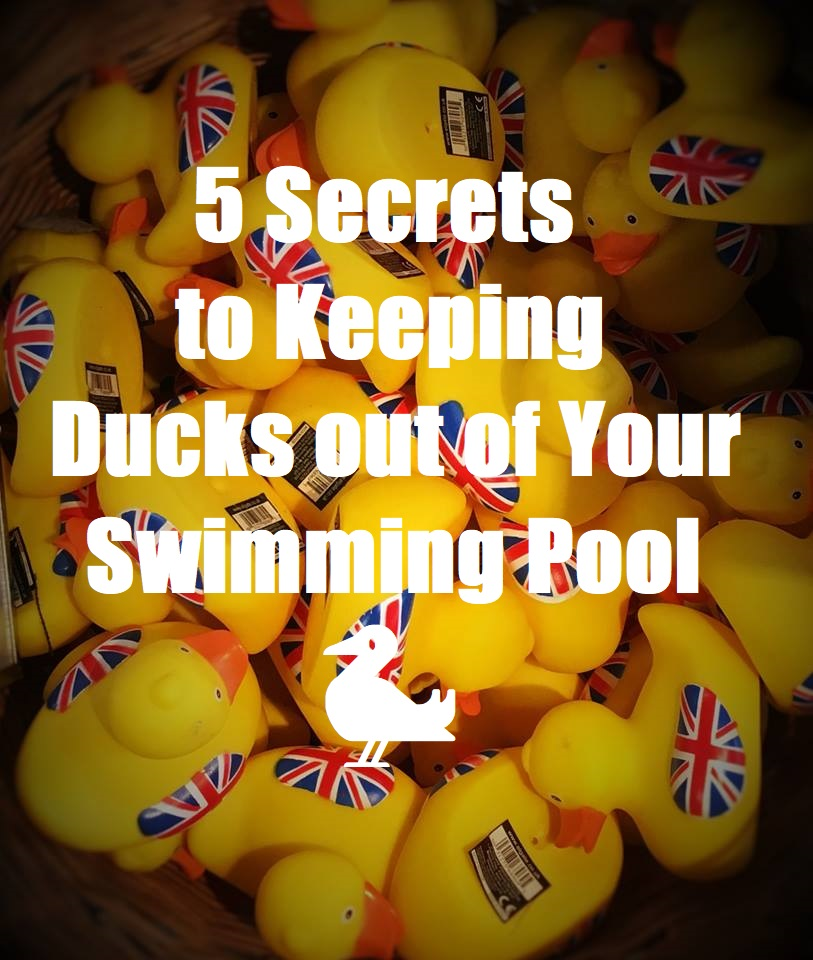 5 Secrets to Keeping Ducks out of Your Swimming Pool