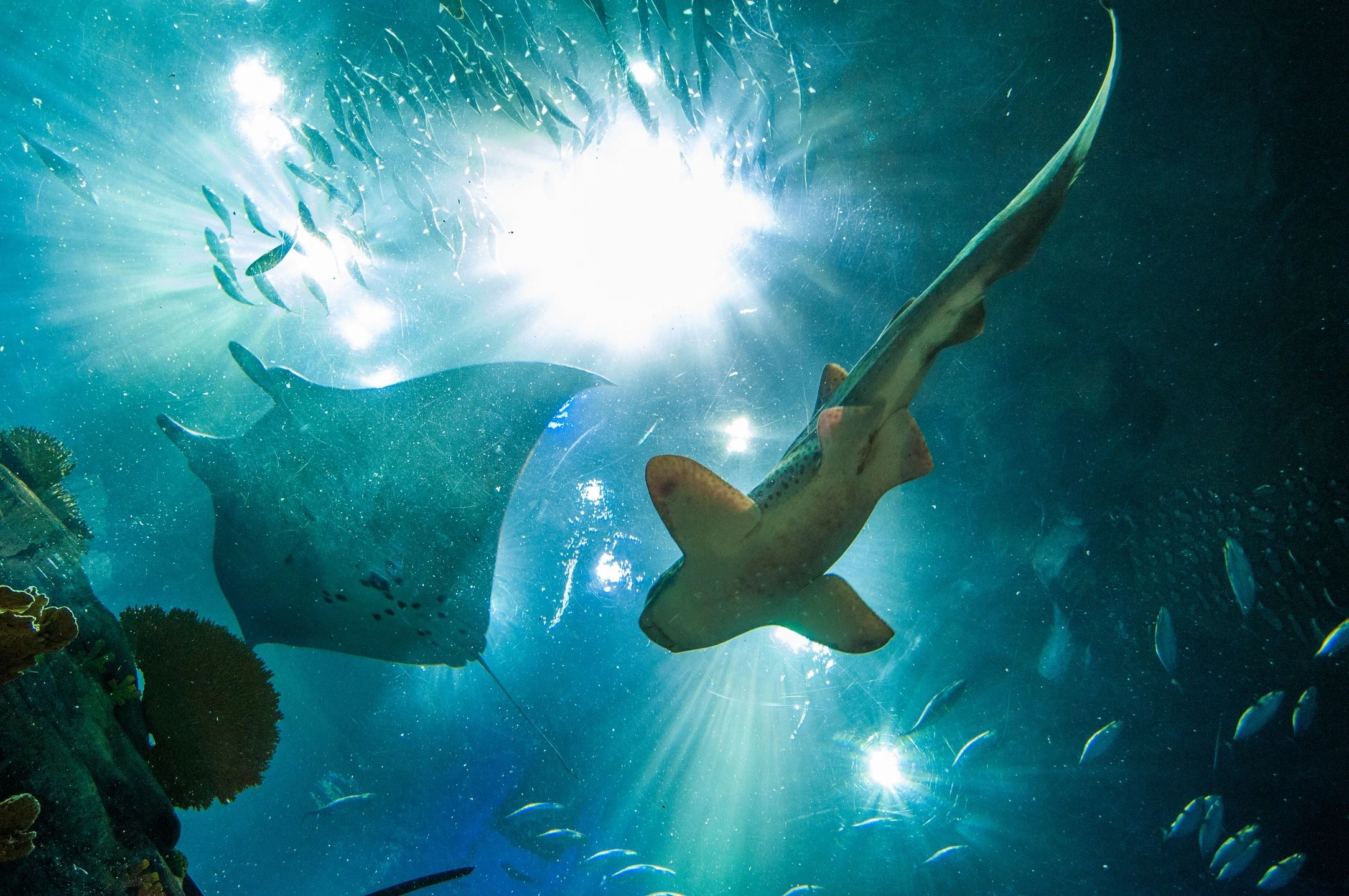 Shark Pool – The Movie