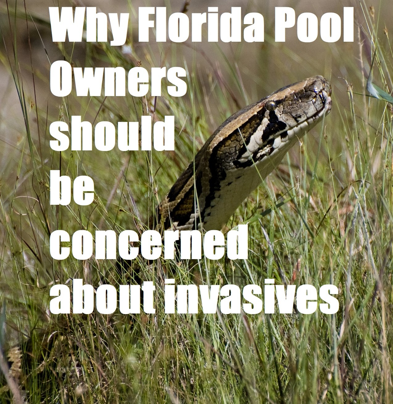 Invasive SwimmingPool – Nonnative Species found in Florida Swimming Pools
