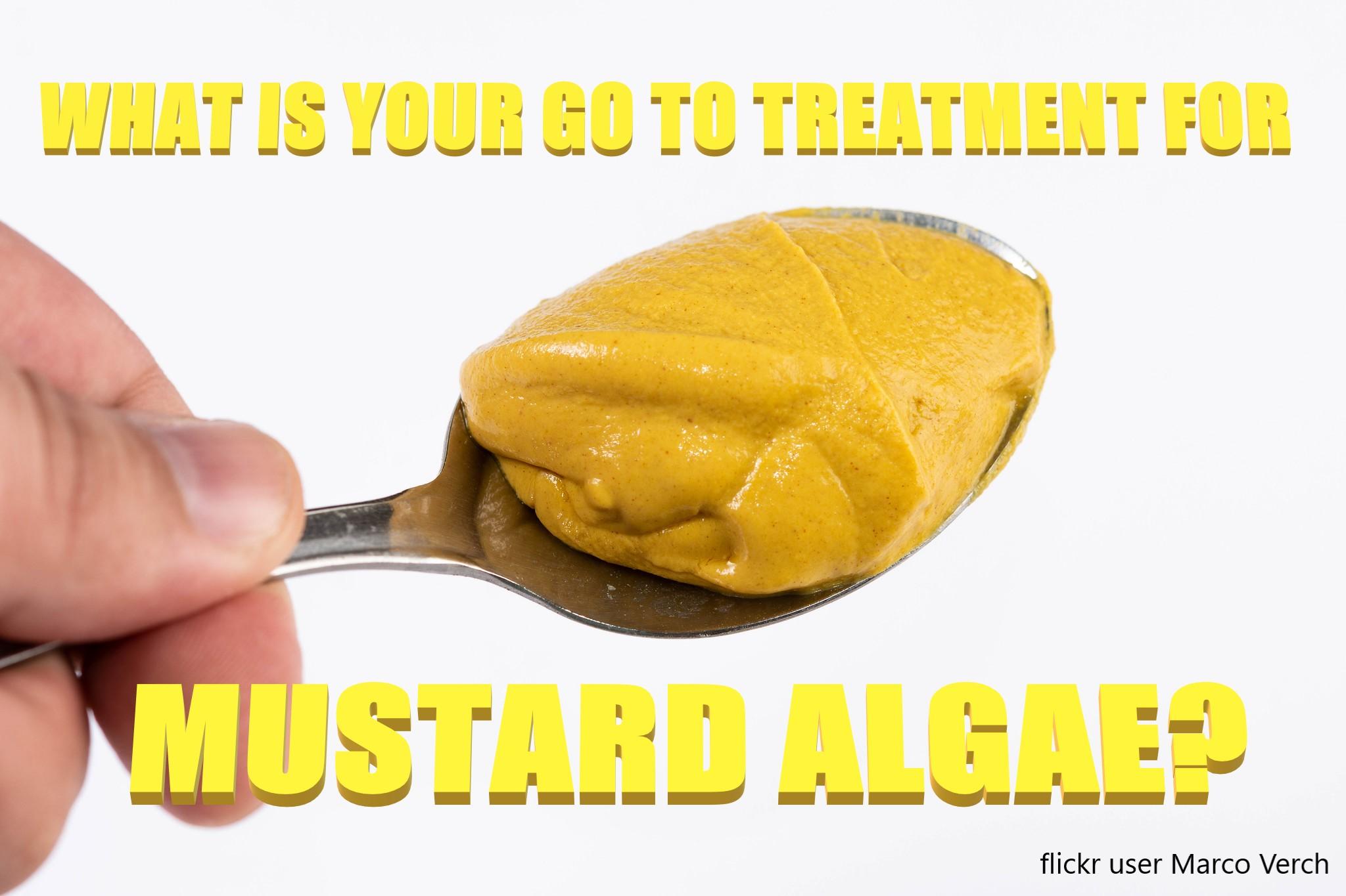 Get Rid of Mustard Algae