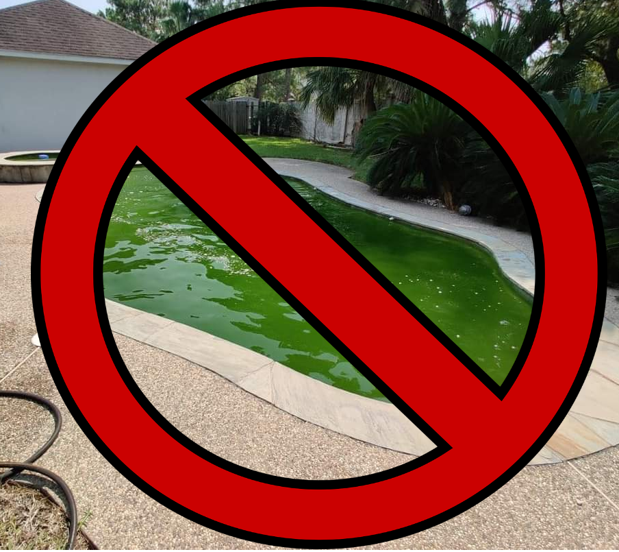Jules's Green Pool Algae Treatment Program